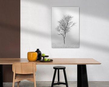 Minimalistische foto van een berkenboom op de heide in de mist. van Patrick van Os