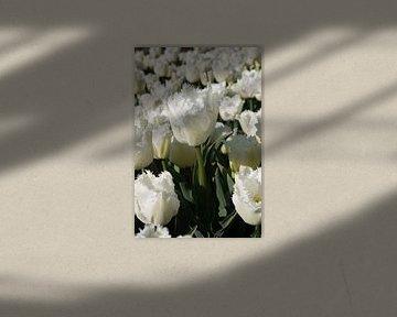 Weiße Tulpe im Zwiebelfeld von Selina de Bue