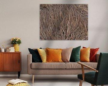 Trockenes Gras von Timon Schneider