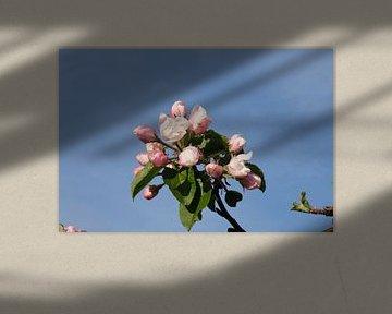 Apfelblüte von Spijks PhotoGraphics