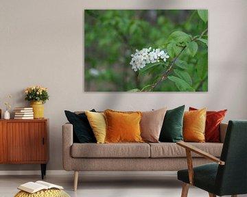 Biene auf weißer Blume von Spijks PhotoGraphics
