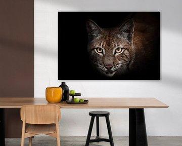 Aandachtige nieuwsgierigheid van gloeiende oranje en gele ogen van schoonheid lynx op zwarte geïsole van Michael Semenov
