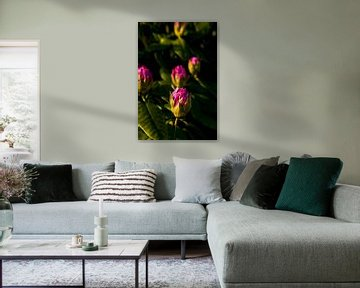 bloemknoppen met zonsondergang | fine art natuurfoto van Karijn | Fine art Natuur en Reis Fotografie