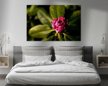 Blume mit Sonnenuntergang | Fine Art Fotokunst von Karijn | Fine art Natuur en Reis Fotografie