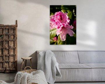 rhododendron, grün und rosa Foto Farben | Kunstfotografie von Karijn | Fine art Natuur en Reis Fotografie