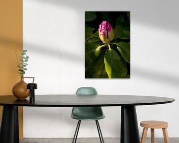 rosa Blume im Schatten | fine art floral art von Karijn | Fine art Natuur en Reis Fotografie