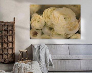 Romantische weiße Ranunkel von Spijks PhotoGraphics