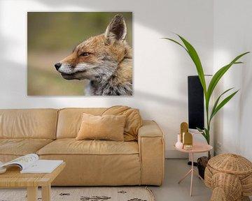 Nahaufnahme eines schönen Fuchses von Patrick van Bakkum
