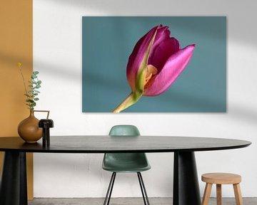 Tulpenblüte von Anette Jäger