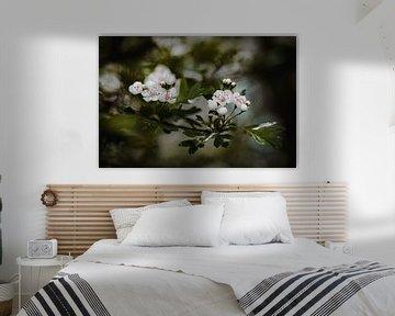 Plain Blossems van Hiske Boon