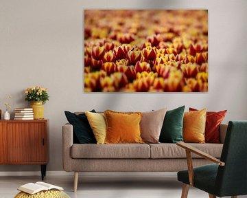 Tulipfield von Lisette Sloet