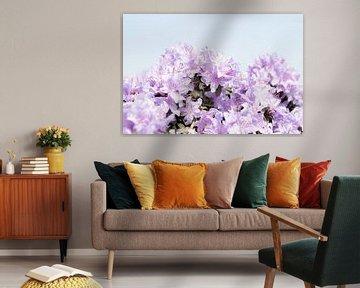 Blüte zeigt sich | Sonnige Frühlingstage von Wendy Boon