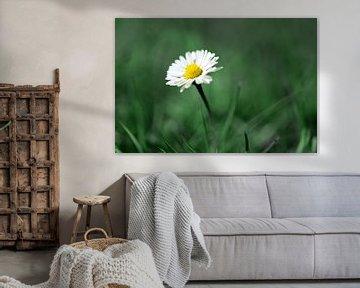 Gänseblümchen im Wald von Rasit's Photo's