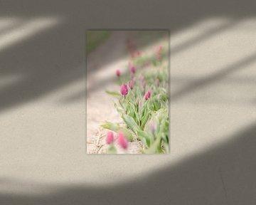 Schöne Tulpen von Vildan Ersert