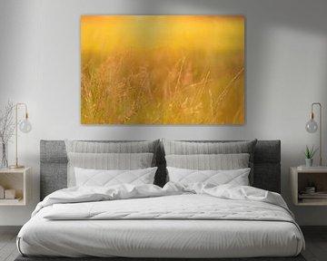 Zo goud als gras   golden hour   Nederland van Mariska Scholtens