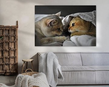 Chatons jouant sur Tuur Wouters