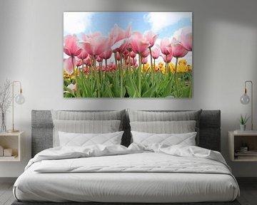 Rosa/weiße Tulpen aus der Zwiebelregion von Rasit's Photo's