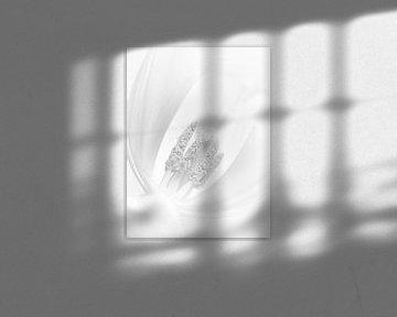 Die Zartheit einer Tulpe von Stephanie Verbeure