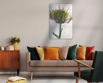 Gelbe Chrysantheme in Eis 2 von Marc Heiligenstein