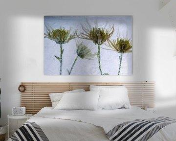 Gelbe Chrysantheme in Eis 3 von Marc Heiligenstein