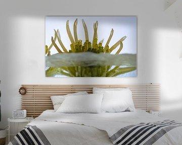 Gelbe Chrysantheme in Eis 1 von Marc Heiligenstein
