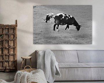 Schapen in zwart wit van Lisanne Rodenburg