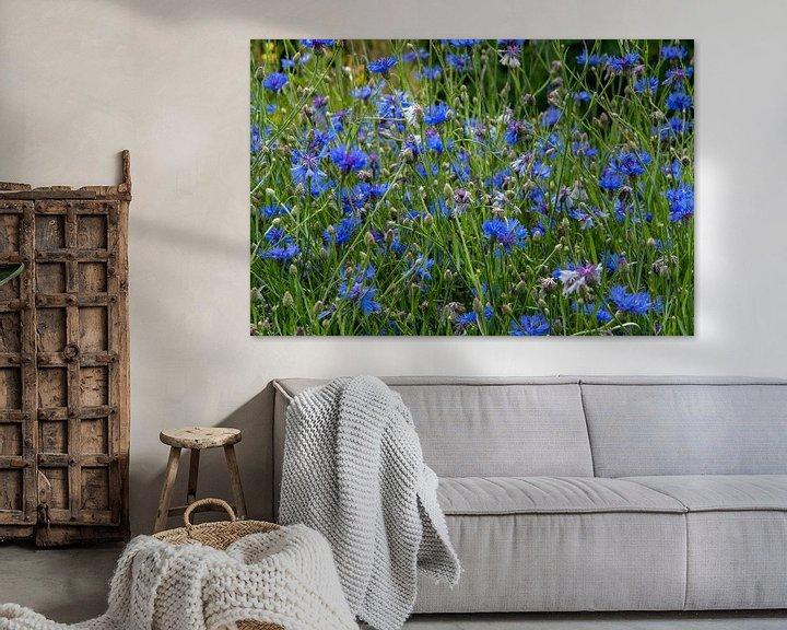 Sfeerimpressie: Veld vol met bloeiende blauwe korenbloemen van JM de Jong-Jansen