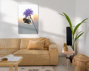Hummel auf einer Blume von Hugo Meekes