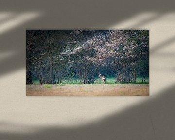 Ree in bloesem van YvePhotography