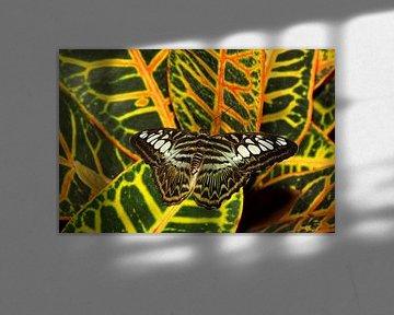 Weerschijn vlinder von Antwan Janssen
