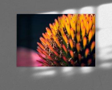 Die Makro-Schönheit der roten Sonnenblume. von Joeri Mostmans