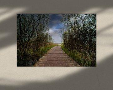 Planken pad op Ameland van Nynke Altenburg