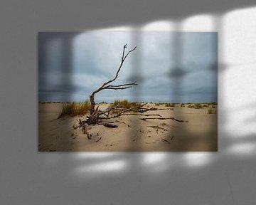 Strand Ameland, dode boom van Nynke Altenburg