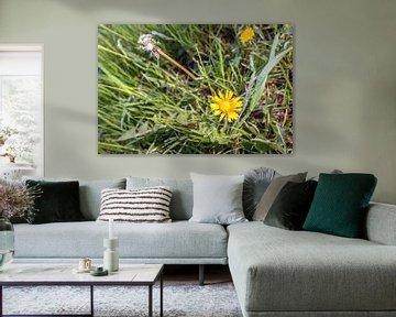 Löwenzahn in Blüte und verwelkt aus der Nähe von Ruud Morijn