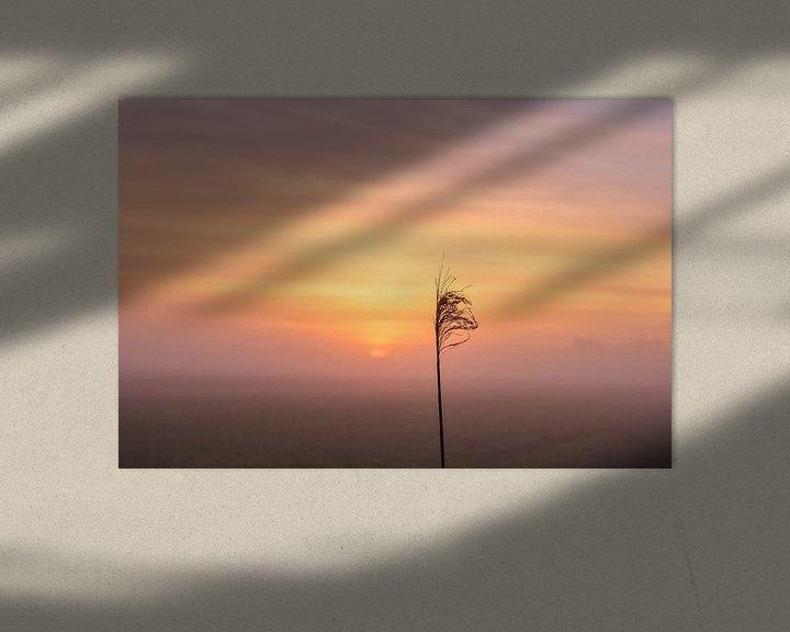 Sfeerimpressie: Oranje van Ilma Fotografie