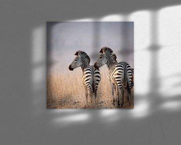 Zebras im Abendlicht von YvePhotography