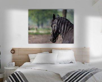 Fries paard van Fons van Noorden