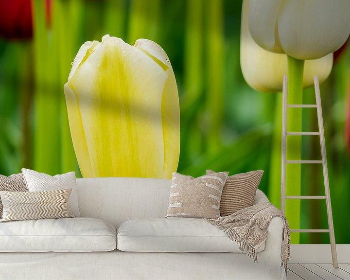 Beispiel fototapete: Gelbe Tulpe von Martijn Tilroe