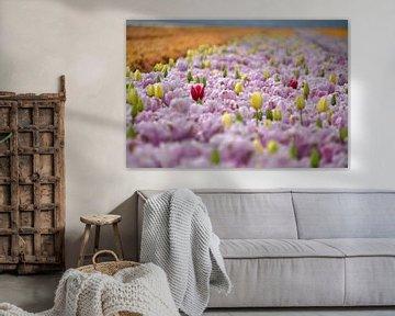 Tulpen, Tulpen und noch mehr Tulpen von FotoGraaG Hanneke