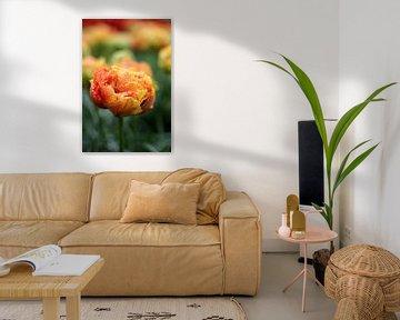 Orangefarbene Tulpe von Alyssa van Niekerk