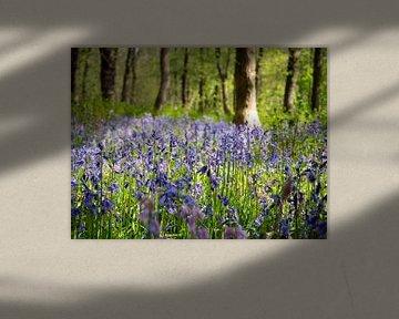 Wilde Waldhyazinthen im Wald von Karin Schijf