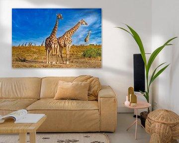 Giraffenherde im Sonnenlicht, Namibia