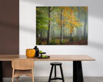 Le début de l'automne sur Arjen Noord