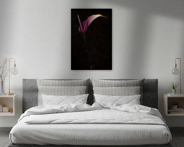 Stilleven van een boem (Anthurium) van Henri van Avezaath