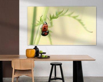 Parende lieveheersbeestjes van Jacqueline Gerhardt