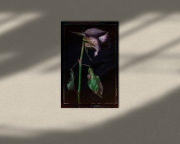 Oude Bloemen 17 van Henk Leijen