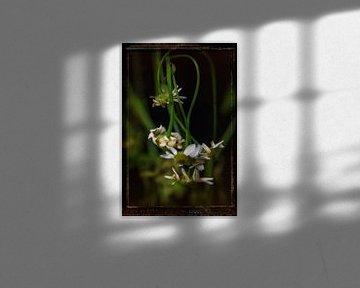 Oude Bloemen 20 van Henk Leijen