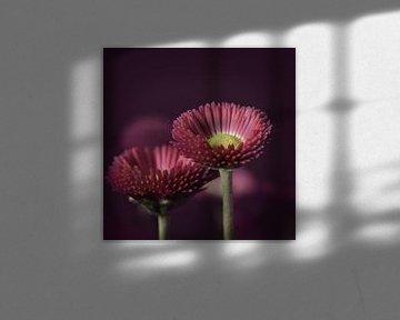 bloemen rose/paars van Saskia Schotanus