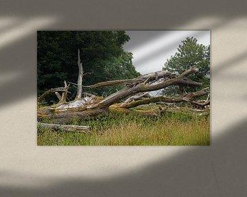 toter Baumstamm von Babetts Bildergalerie