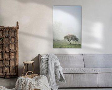 Eenzame boom van Frans Scherpenisse